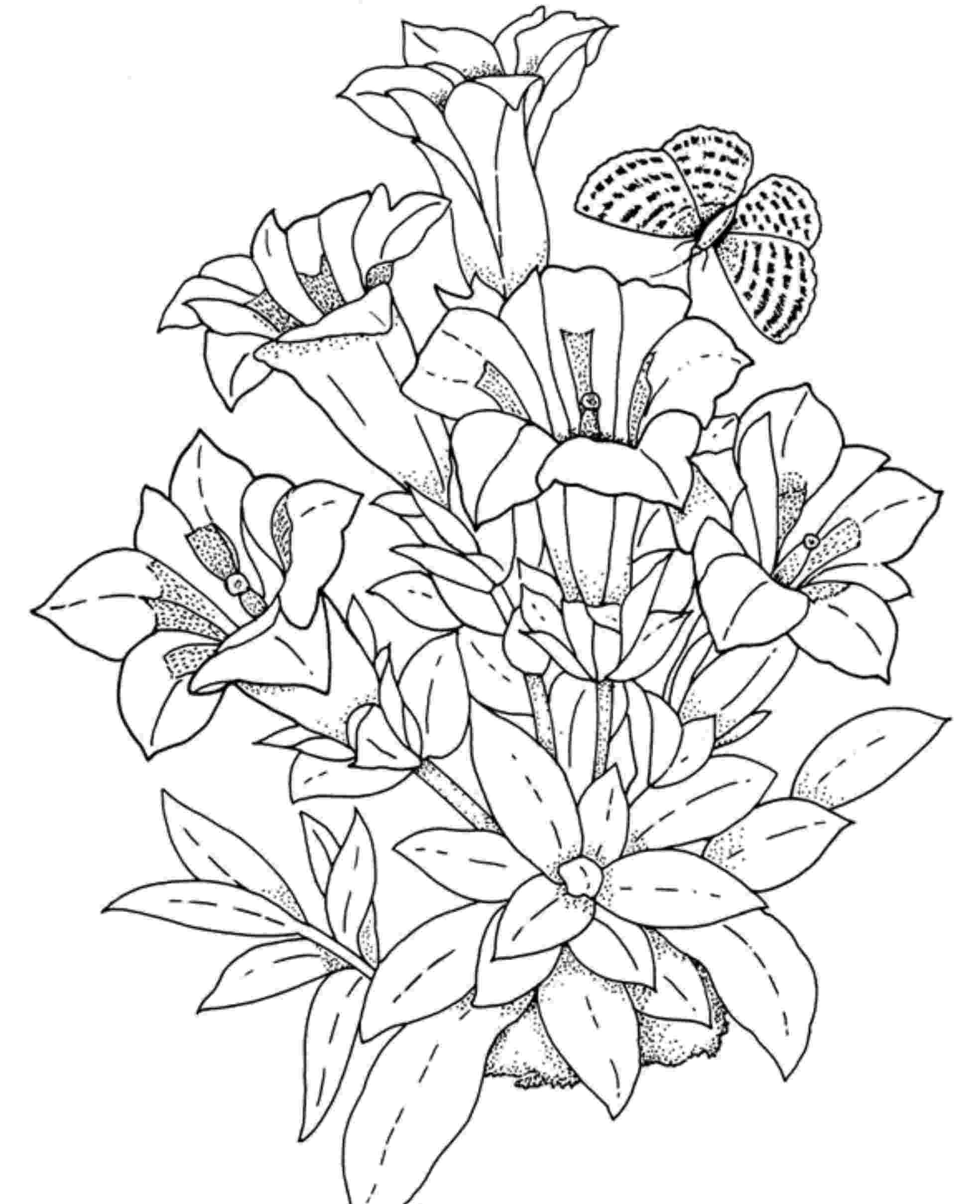 free printable flower coloring pages for adults free spring coloring pages for adults the country chic pages adults printable flower coloring for free