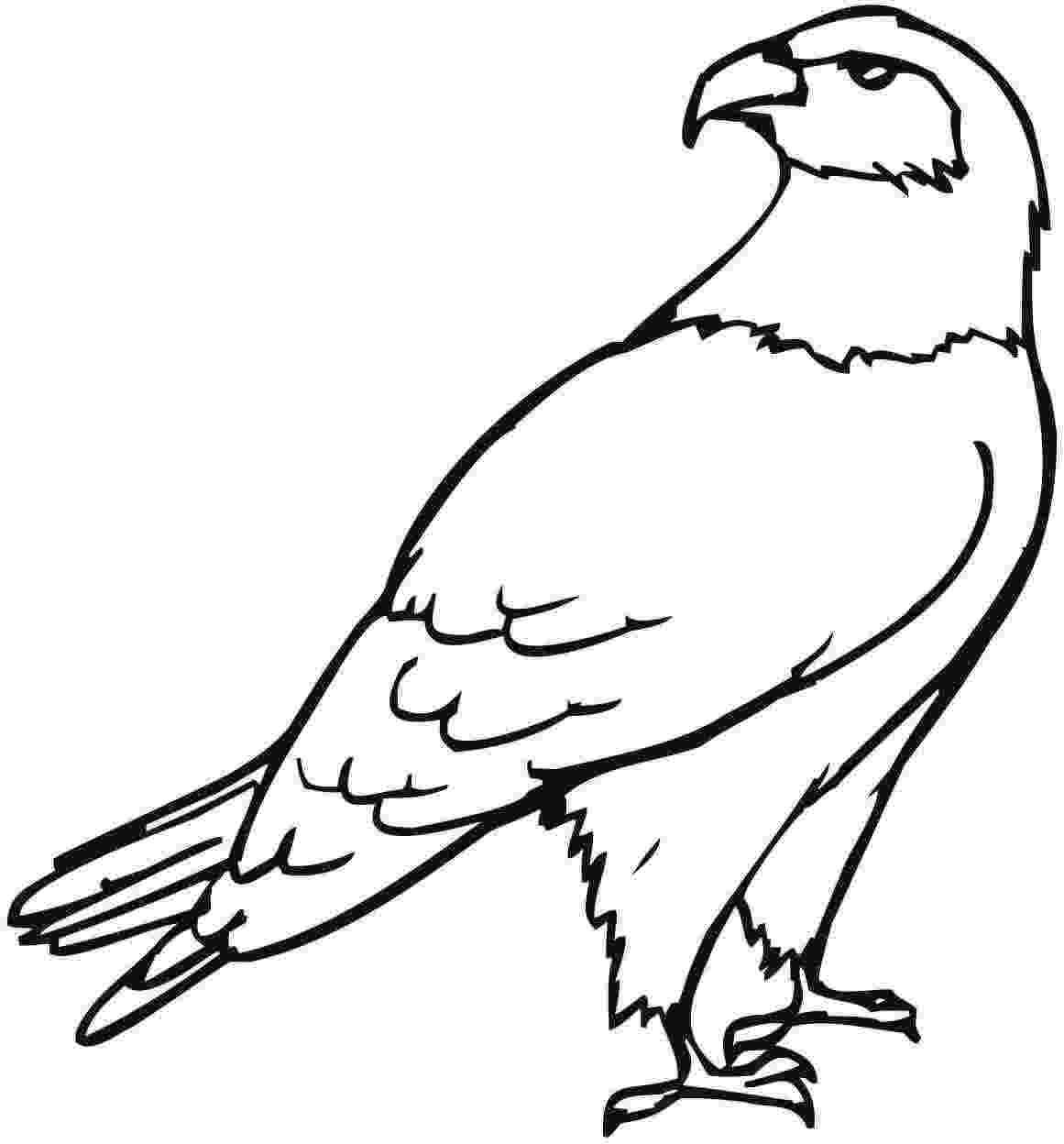 free printable pictures of eagles bald eagle head coloring page coloringsnet pictures free of printable eagles