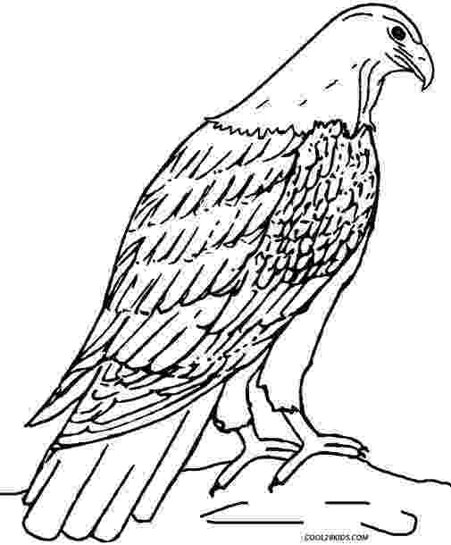 free printable pictures of eagles eagle bird coloring pages to printable eagles of printable pictures free