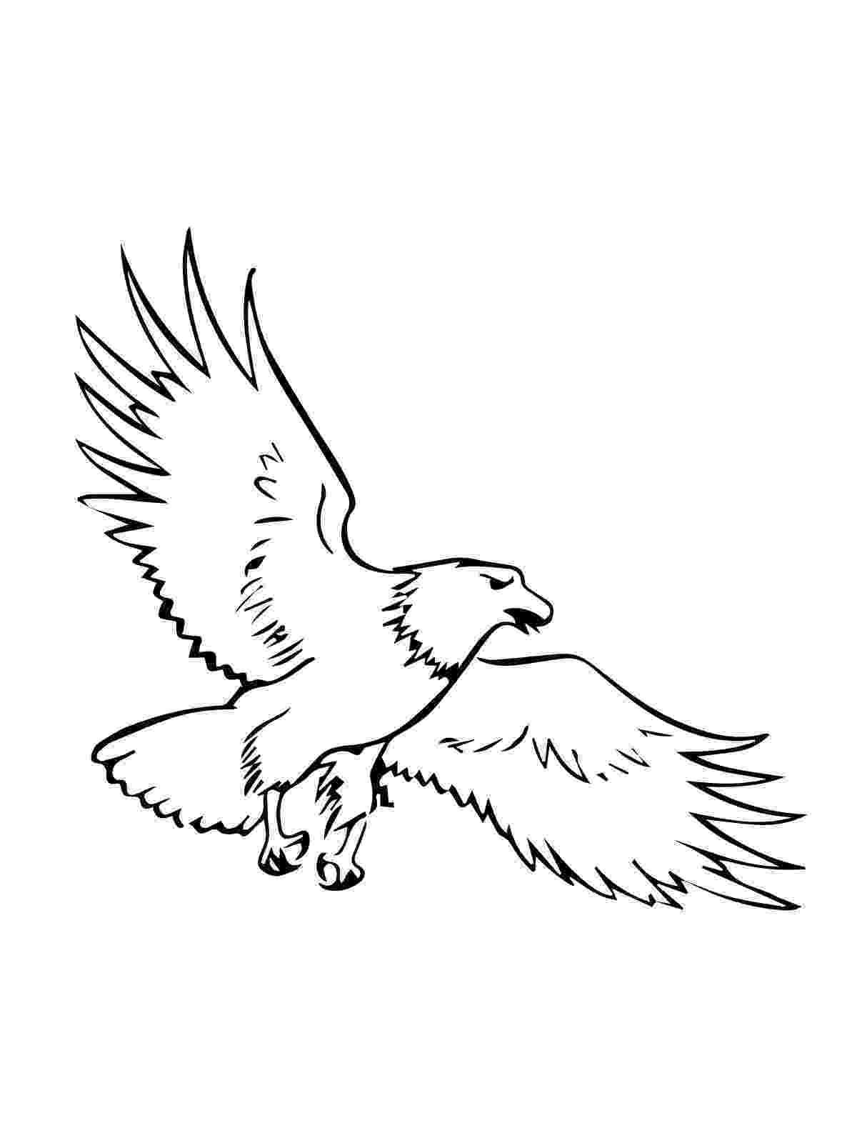 free printable pictures of eagles eagle coloring page coloring home pictures eagles of printable free