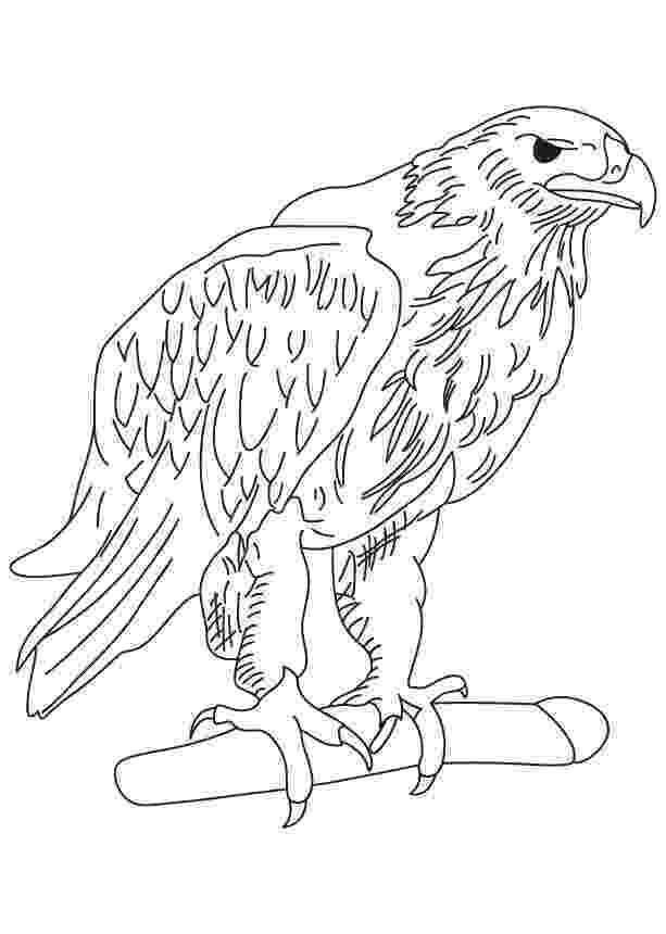 free printable pictures of eagles printable bald eagle coloring pages for kids cool2bkids free of eagles printable pictures