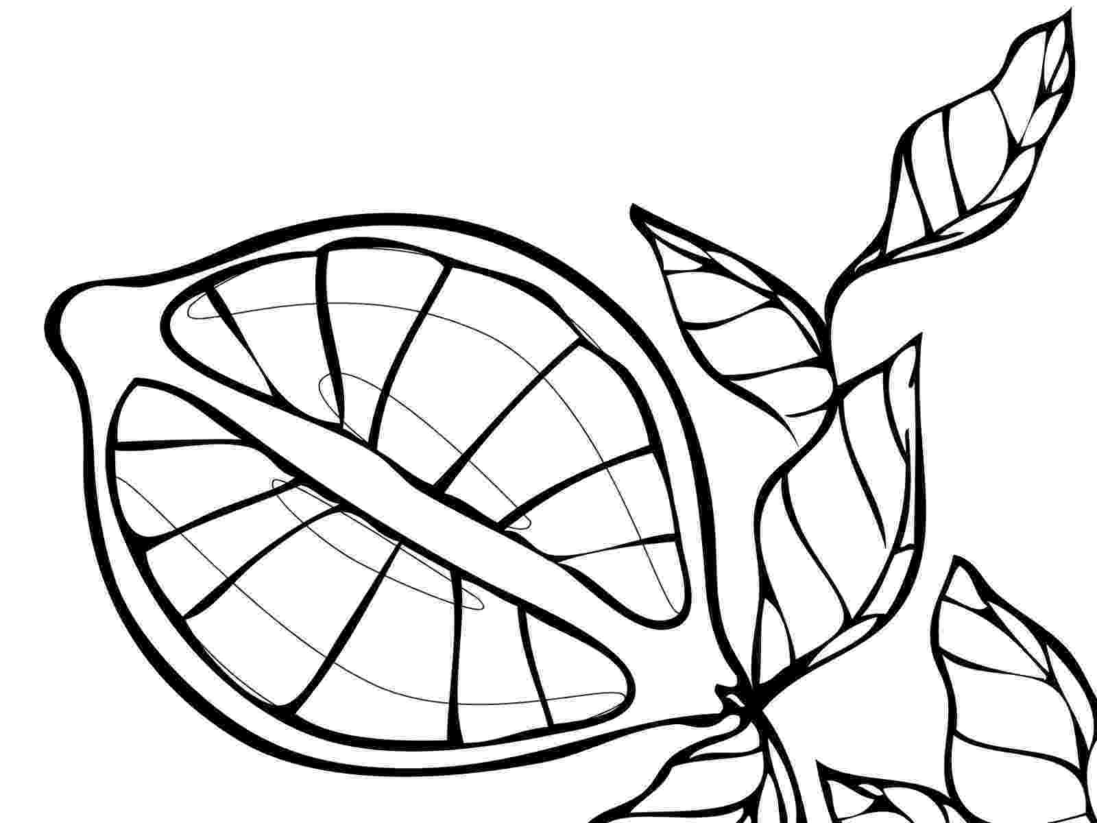 fruit coloring pages fruits coloring sheet pictures pages coloring fruit