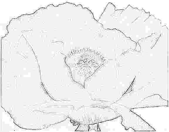 georgia o keeffe coloring pages georgia coloring pages o keeffe