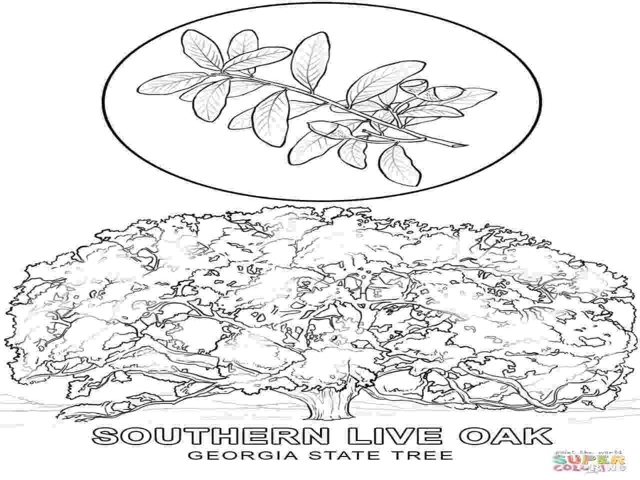 georgia o keeffe coloring pages georgia o keeffe coloring pages 650839 coloring picture o keeffe georgia coloring pages