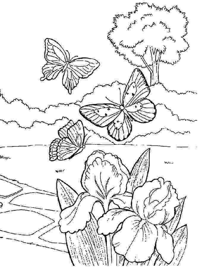 georgia o keeffe coloring pages georgia okeeffe practical pages keeffe pages georgia o coloring