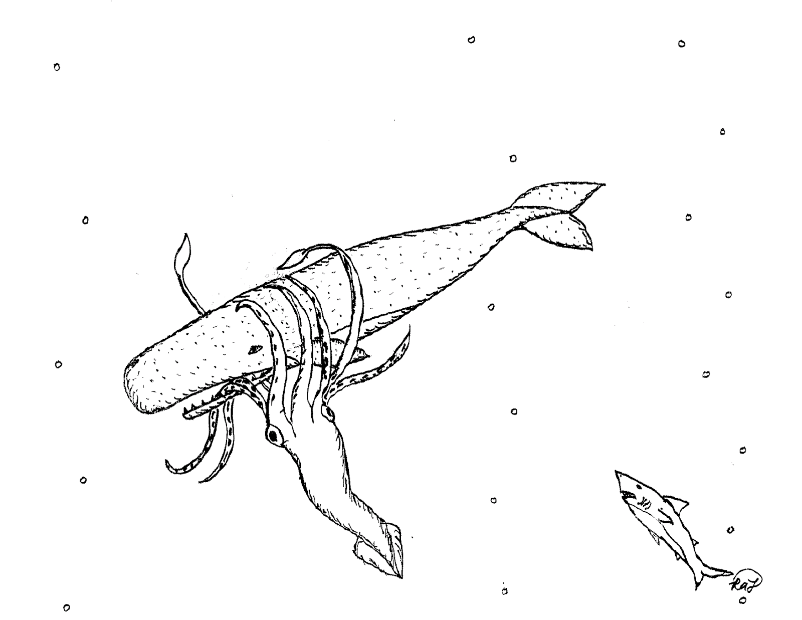 giant squid coloring page the great live squid which they say few whale ships page coloring squid giant