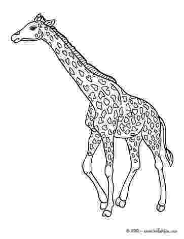 giraffe coloring pages giraffe coloring pages hellokidscom coloring giraffe pages