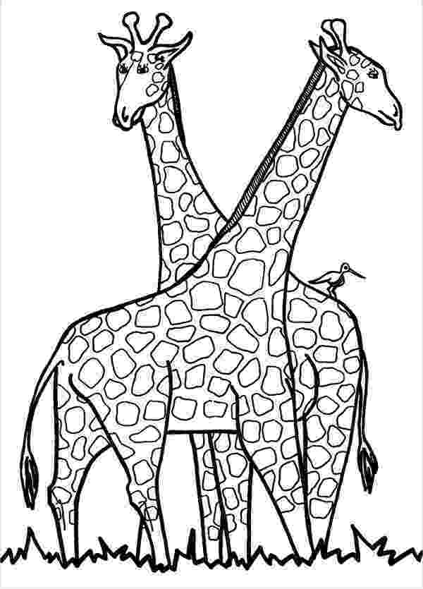 giraffe coloring pages print download giraffe coloring pages for kids to have fun coloring pages giraffe