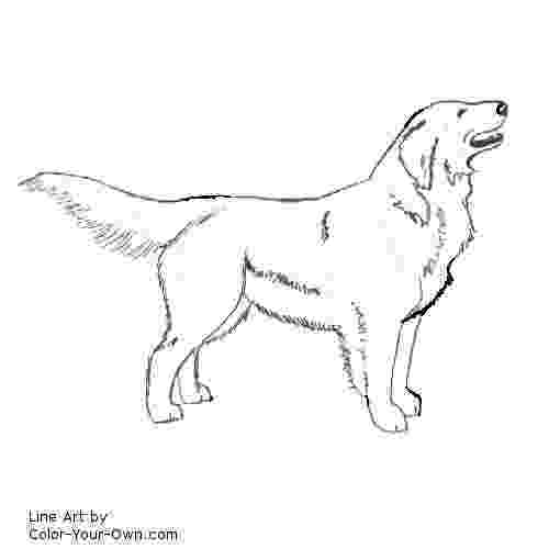 golden retriever coloring pages golden retriever clip art black and white sketch coloring page pages coloring retriever golden