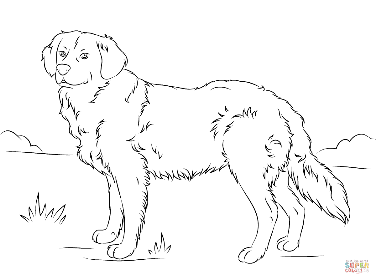 golden retriever puppy coloring pages golden retriever puppy drawing at getdrawings free download pages golden coloring puppy retriever