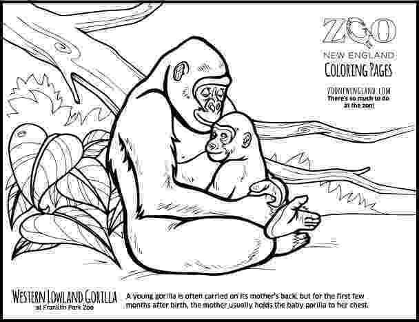 gorilla printable gorilla coloring page twisty noodle gorilla printable