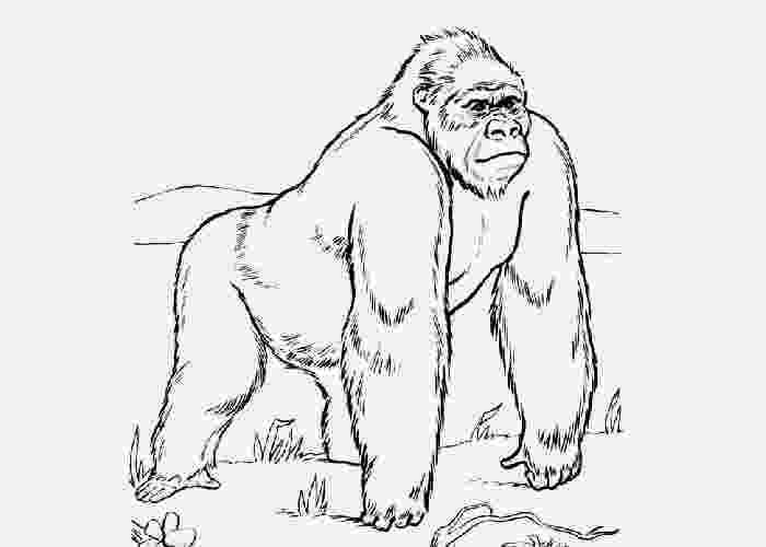 gorilla printable realistic gorilla coloring pages gorilla printable