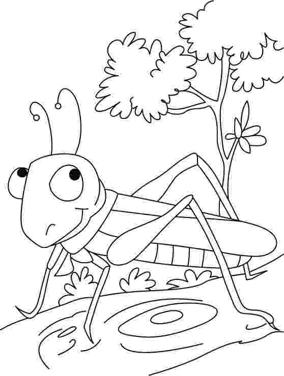 grasshopper coloring page grasshopper drawing for kids clipart panda free coloring page grasshopper