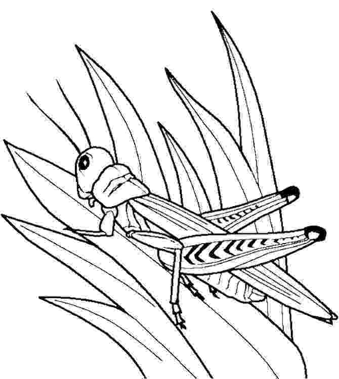 grasshopper coloring pages 11 best images about putukad on pinterest coloring pages coloring pages grasshopper