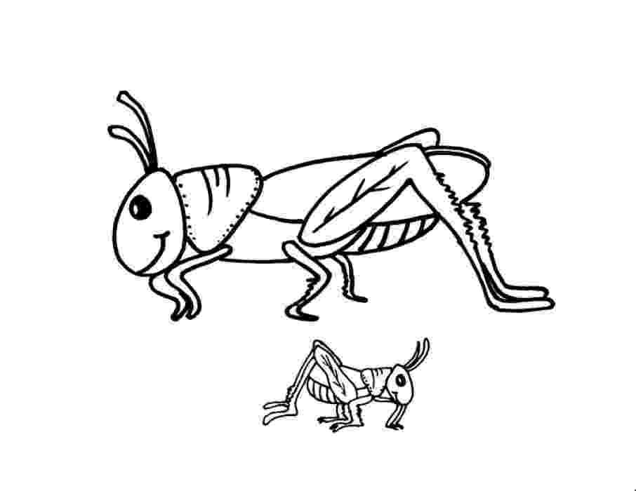 grasshopper coloring pages grasshopper coloring page free printable coloring pages coloring pages grasshopper