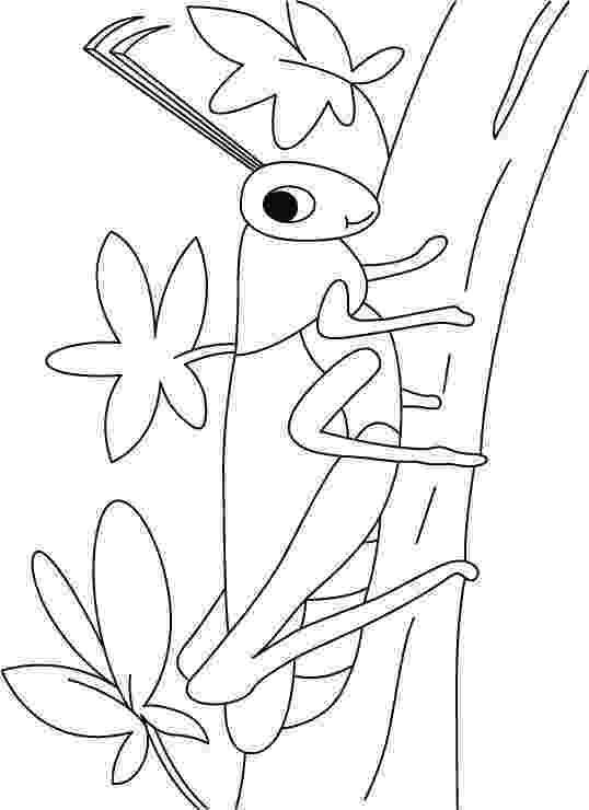 grasshopper coloring pages grasshopper coloring pages coloring for kids pinterest coloring pages grasshopper