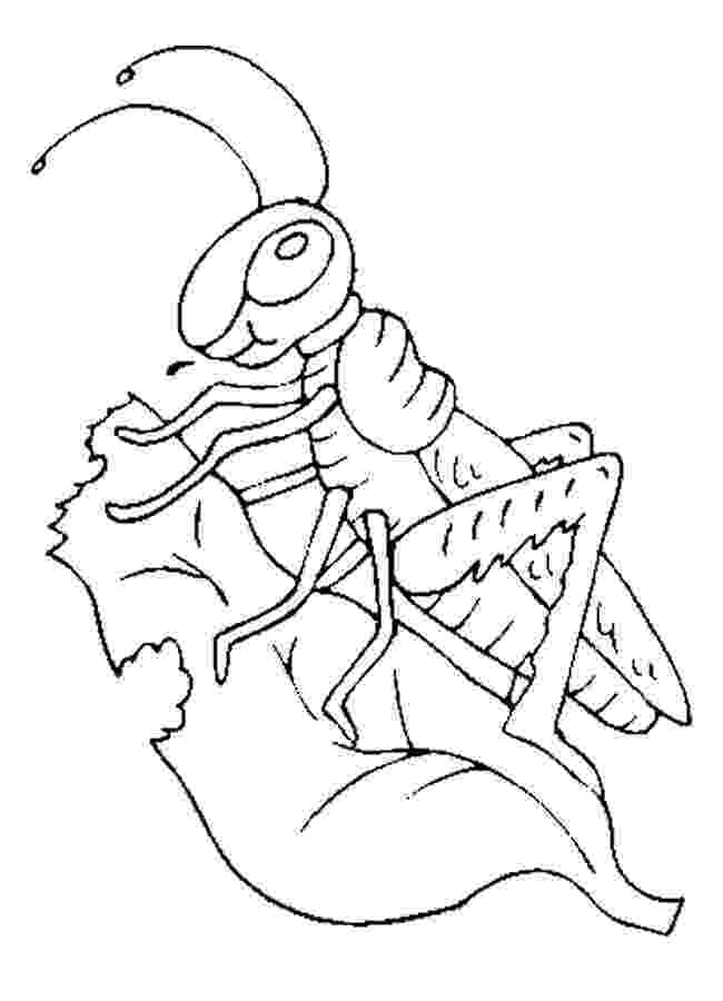 grasshopper coloring pages grasshopper coloring pages for kids preschool and coloring grasshopper pages