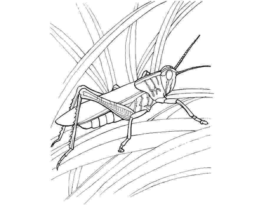 grasshopper coloring pages grasshopper coloring pages for kids preschool and pages coloring grasshopper 1 1