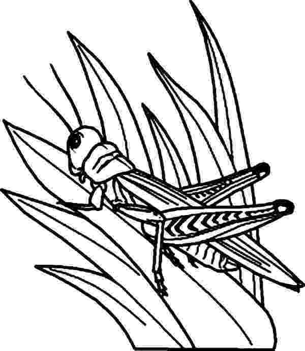 grasshopper coloring pages grasshopper watching predator from grass coloring page pages grasshopper coloring