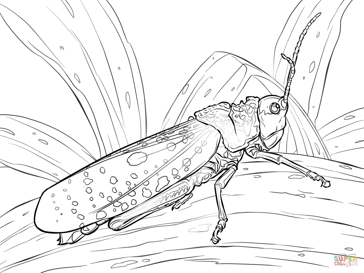 grasshopper coloring pages the ant and the grasshopper coloring pages coloring home coloring grasshopper pages