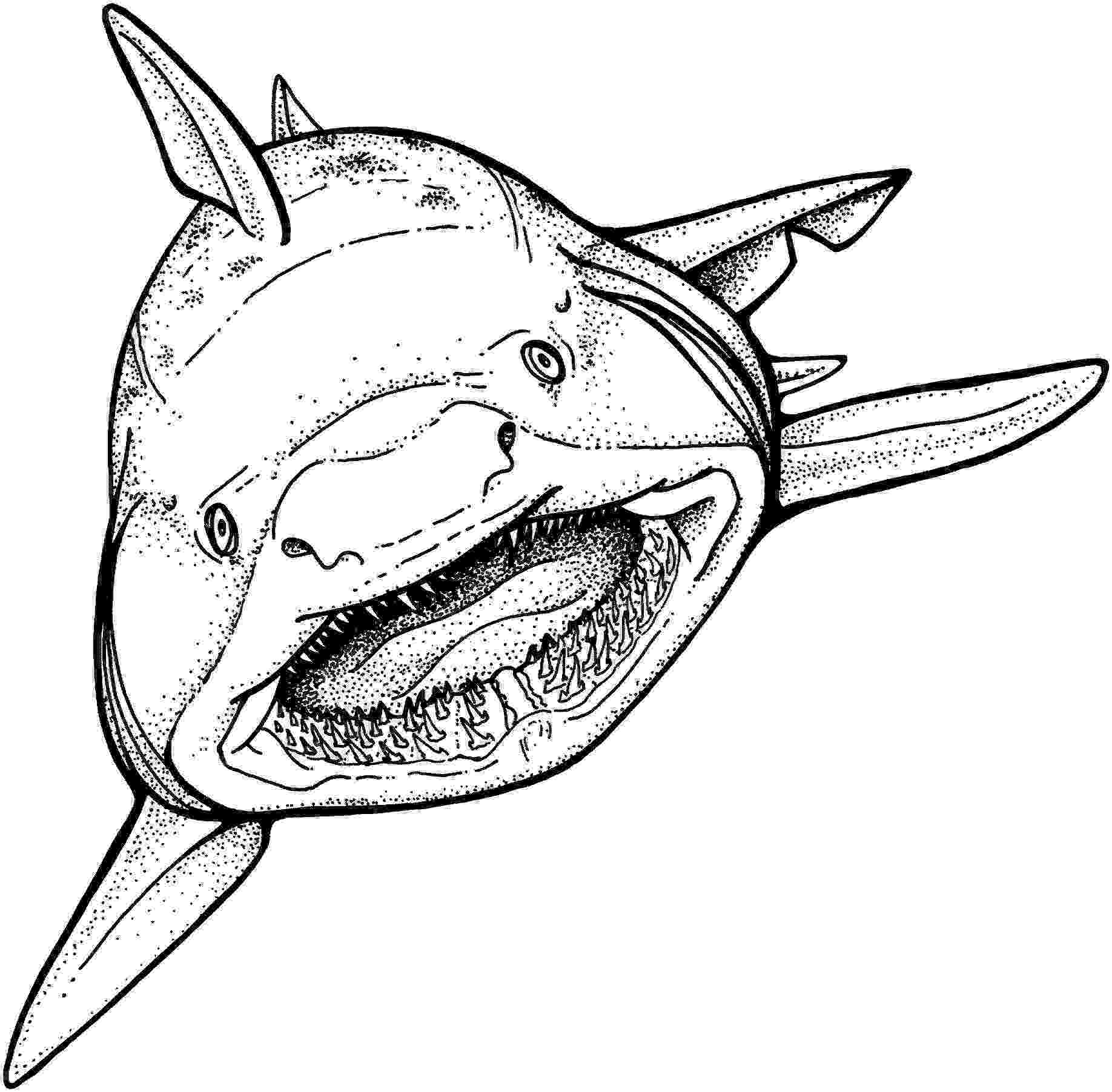 great white shark coloring coloring page base shark coloring pages white sharks coloring white shark great
