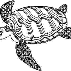 green sea turtle coloring page download online coloring pages for free part 162 page turtle coloring green sea