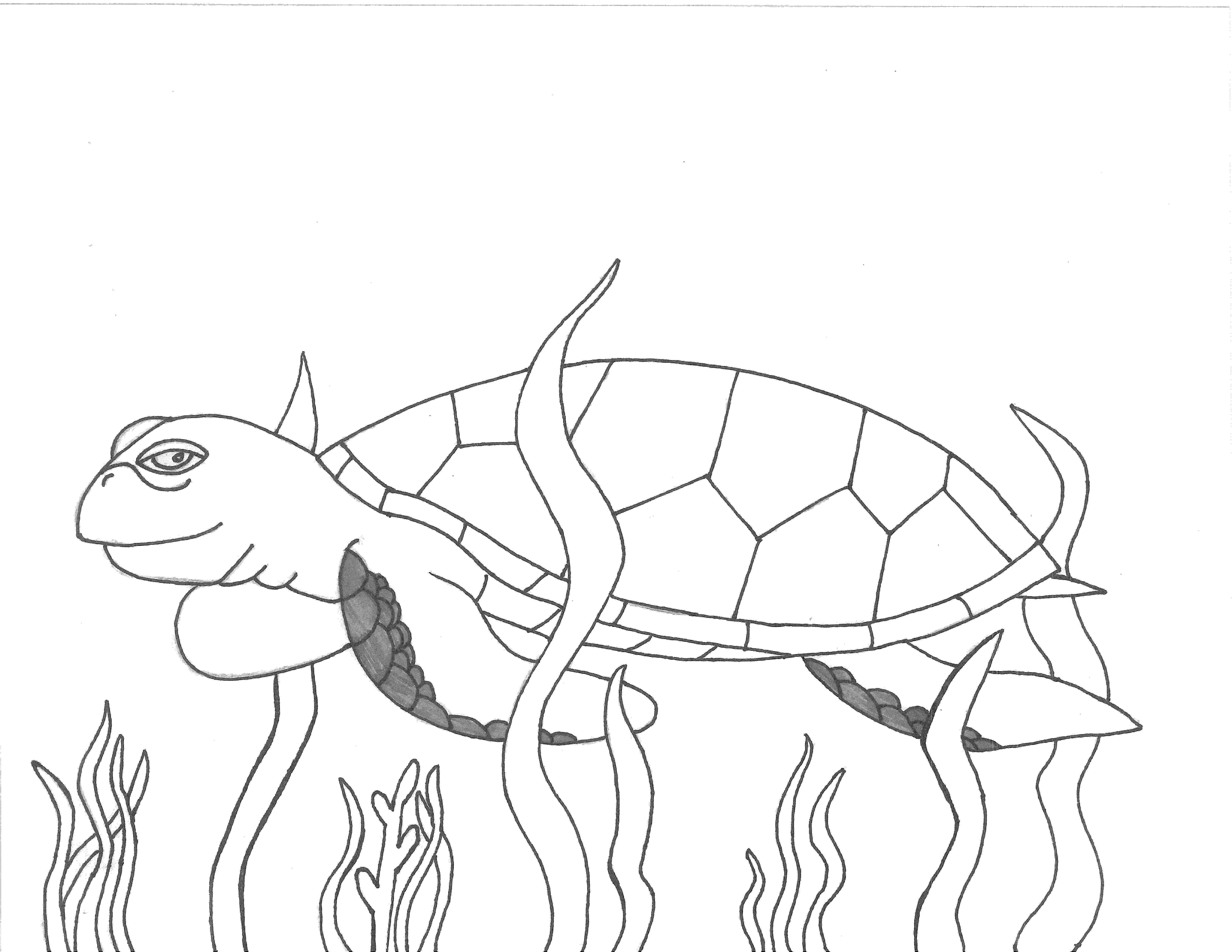green sea turtle coloring page facts discovery sea turtle exploration sea green coloring turtle page
