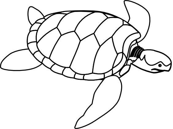 green sea turtle coloring page fish sea creature coloring pages sheknowscom page 2 page coloring green sea turtle