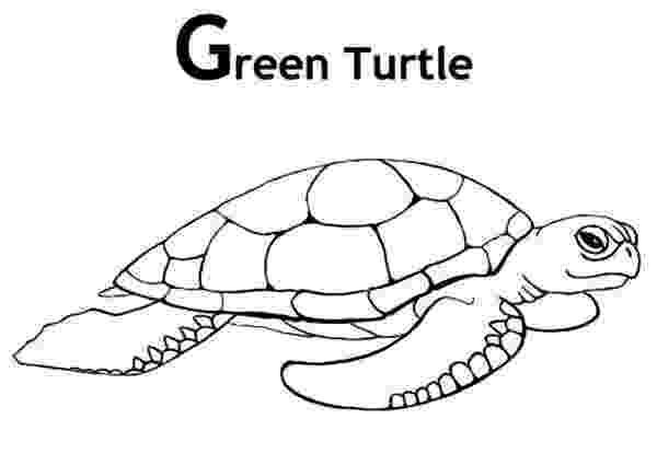 green sea turtle coloring page green sea turtle coloring page sketch coloring page page coloring sea turtle green