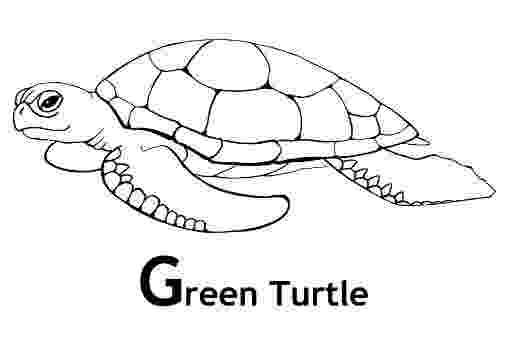 green sea turtle coloring page green sea turtle coloring pages and facts turtle green coloring turtle sea page