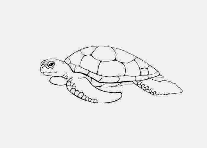green sea turtle coloring page green turtle coloring pages free coloring pages and turtle coloring page sea green