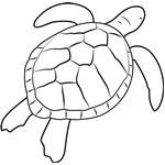 green sea turtle coloring page hawaiis green sea turtles by monika mira bookreview page green turtle coloring sea
