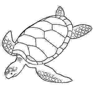 green sea turtle coloring page mother is upset the kitchen is dirty coloring pages green page sea turtle coloring