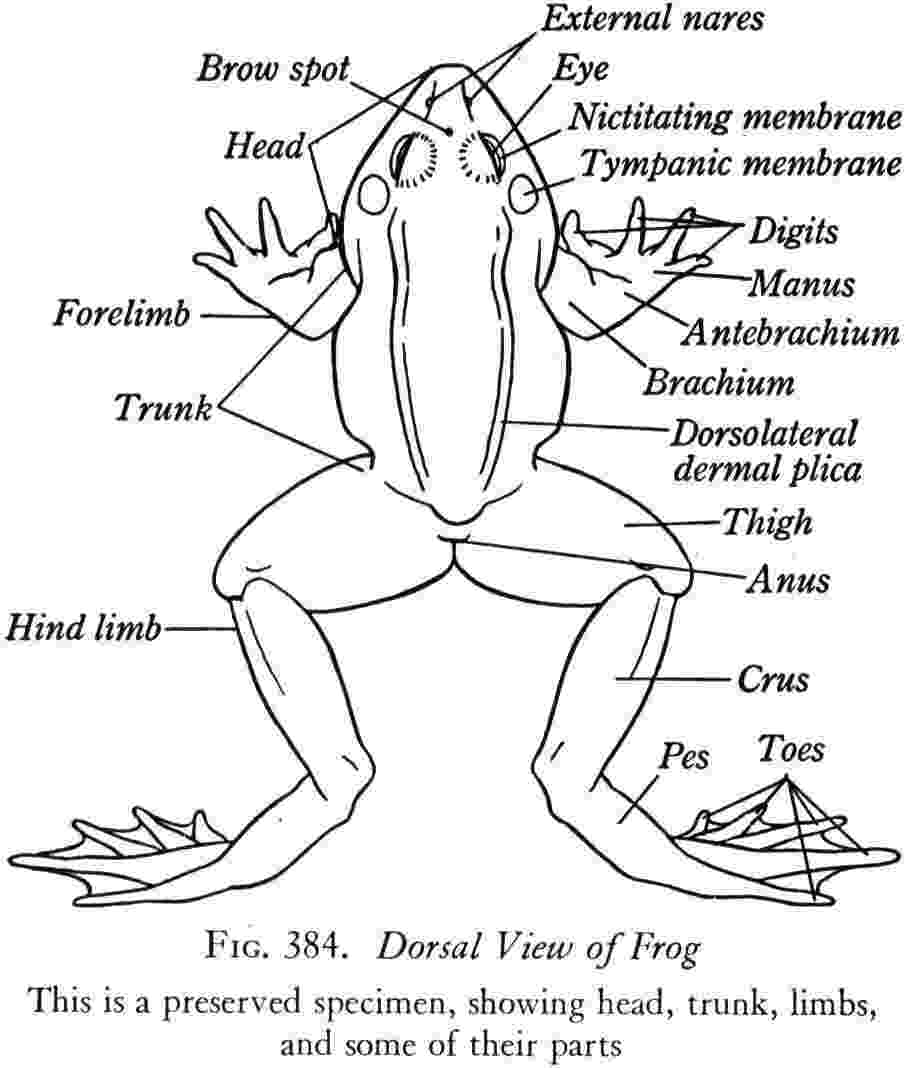 how to a frog caring for tadpoles from egg to froglet pethelpful a to frog how