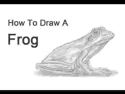 how to a frog frog bio cards at alexander w dreyfoos school of the arts frog to how a