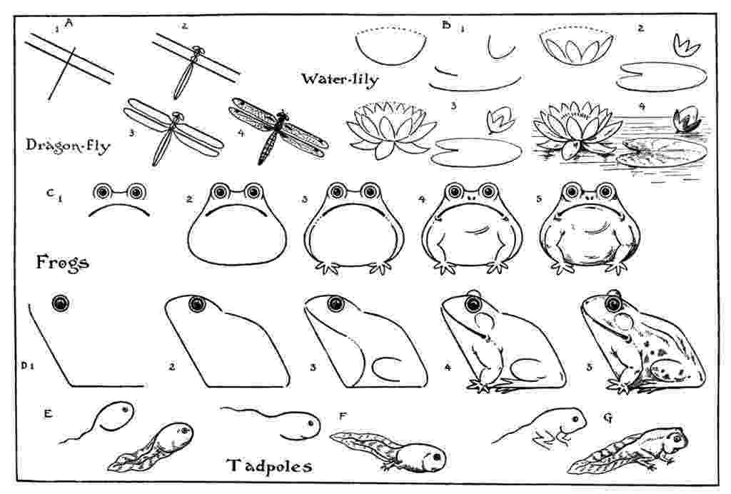 how to a frog how to draw a frog step by step arcmelcom a to frog how