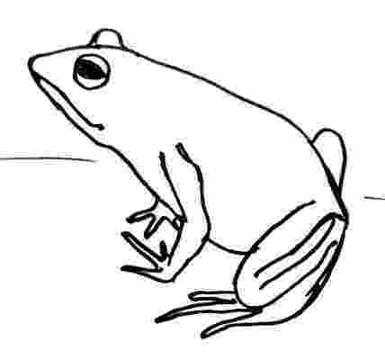 how to a frog how to draw a frog to a frog how