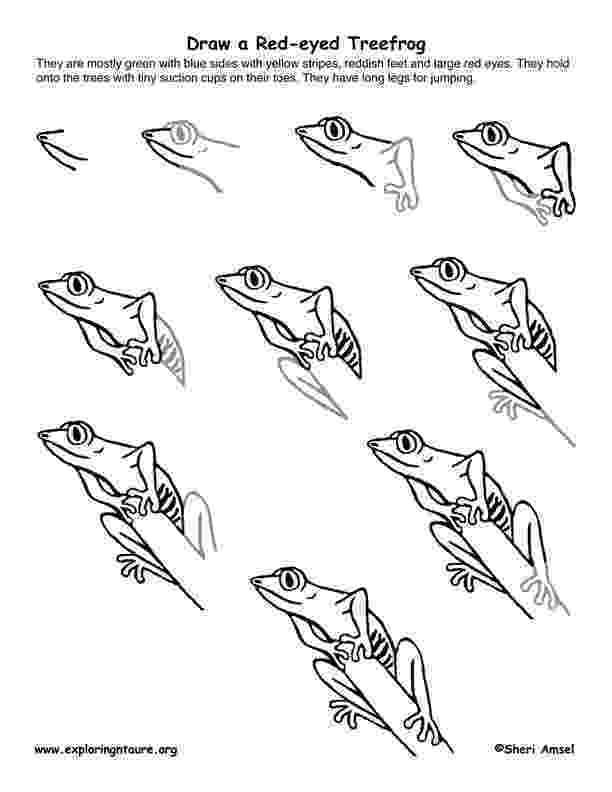 how to a frog how to draw a toad draw central a frog how to