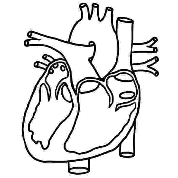 human heart coloring page 7 heart coloring pages jpg ai illustrator download heart coloring page human