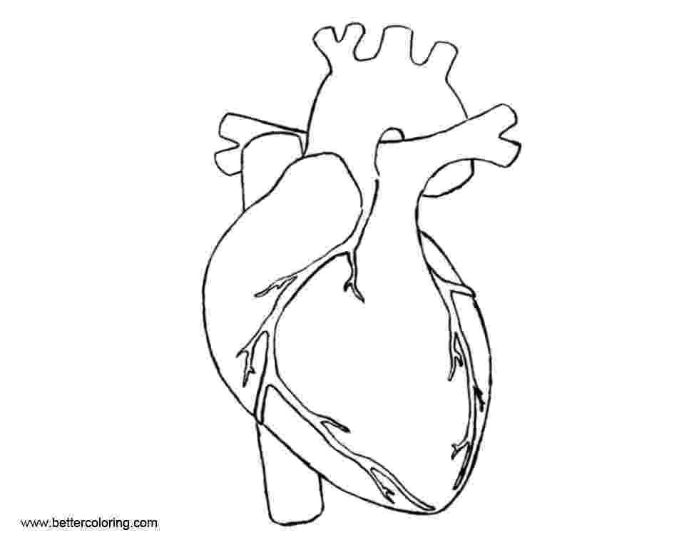 human heart coloring page anatomical heart outline tattoo sketch coloring page coloring page heart human