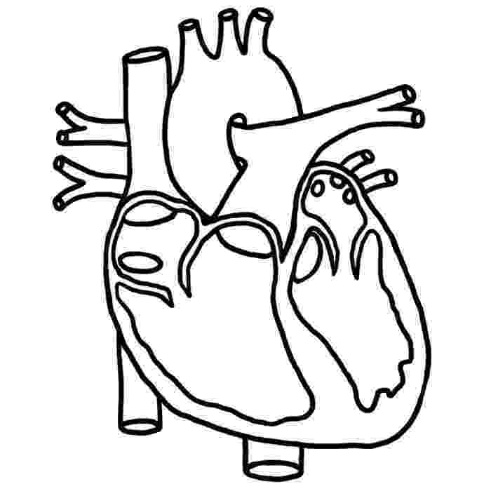human heart coloring page anatomy of heart coloring pages internal human organ page human coloring heart