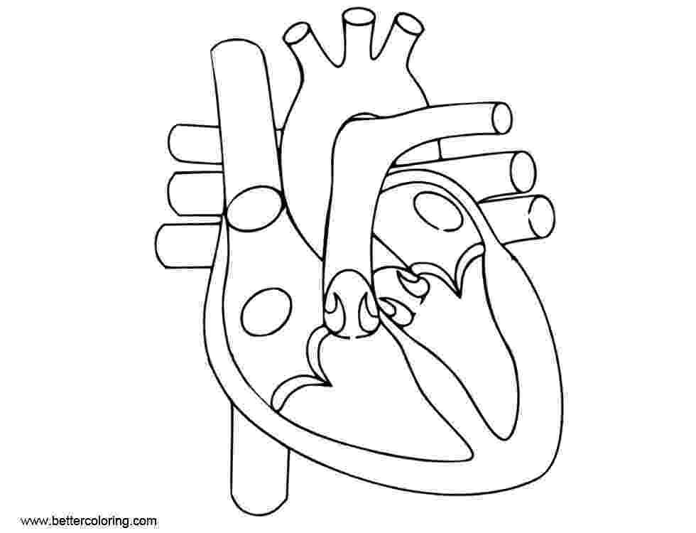 human heart coloring page ausmalbild herz ausmalbilder kostenlos zum ausdrucken heart coloring page human