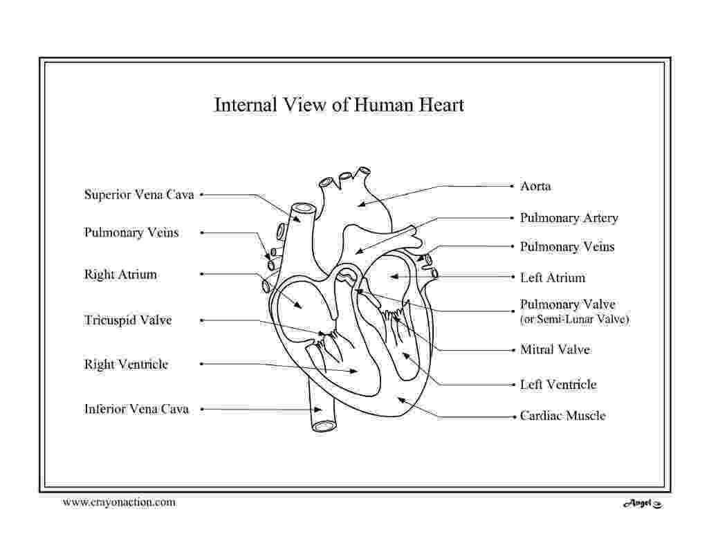 human heart coloring page blank brain diagram color world of reference heart page coloring human