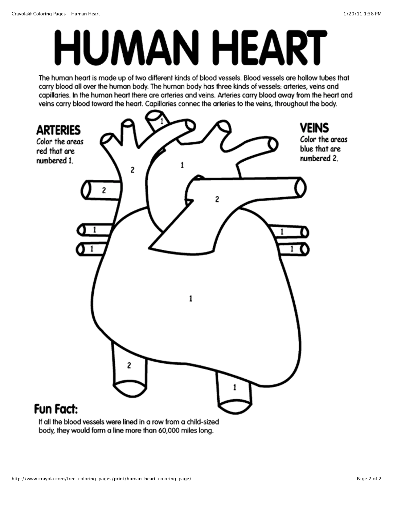 human heart coloring page buoyancy coloring page coloring pages coloring page heart human