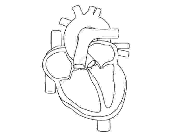 human heart coloring page human body heart coloring pages high quality coloring heart coloring human page