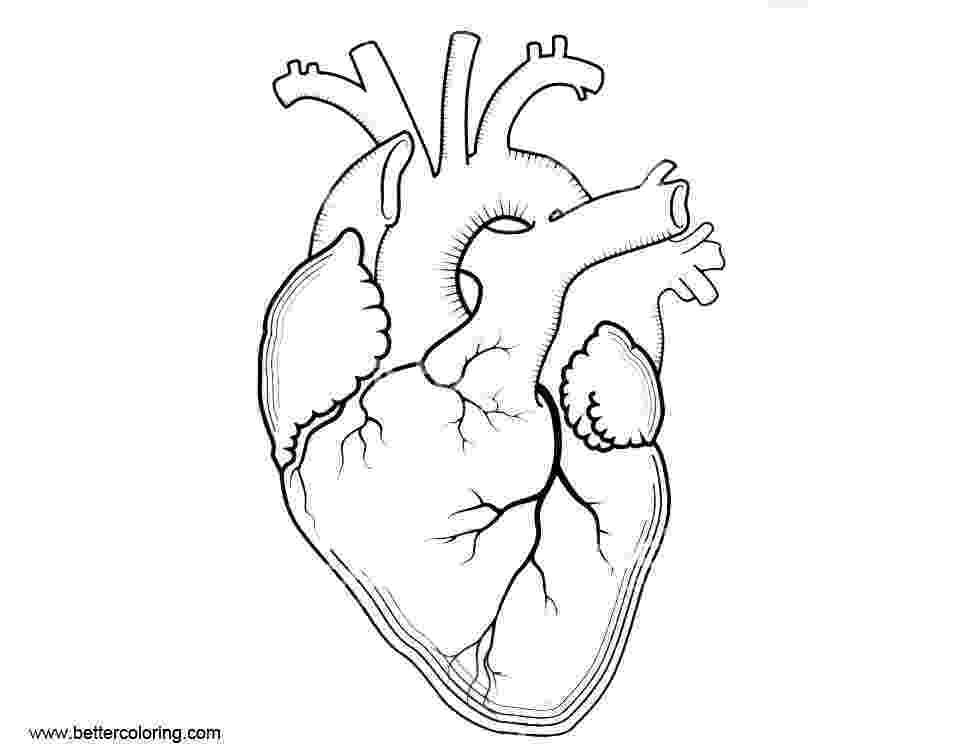 human heart coloring page human heart anatomy coloring pages free printable coloring human page heart