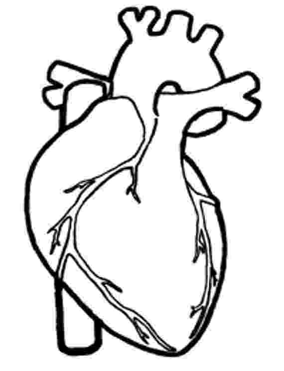 human heart coloring page human heart color pages i had to exit then return to page heart human page coloring