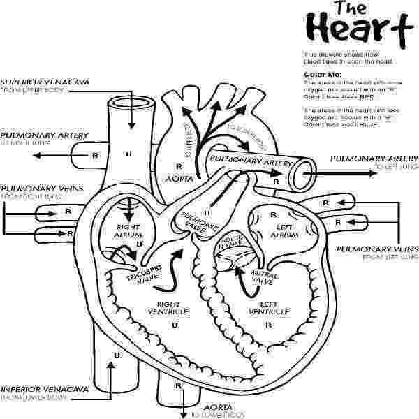 human heart coloring page human heart coloring pages coloring pages heart page heart coloring human