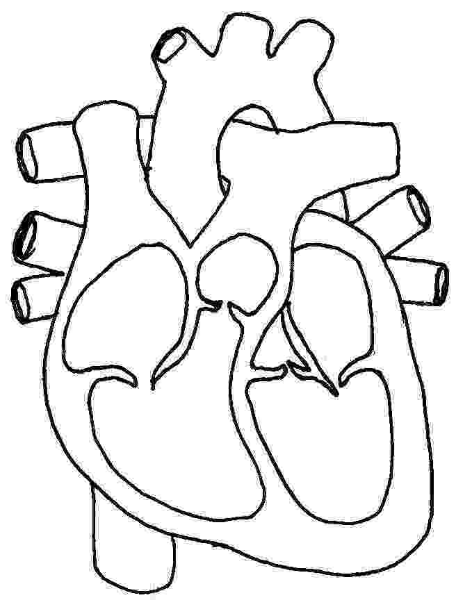 human heart coloring page step 5 how to draw a human heart heart page human coloring