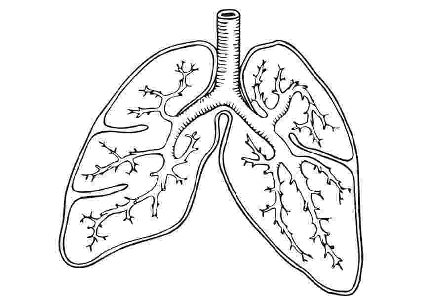 human lungs coloring pages lung coloring page coloringcrewcom lungs human pages coloring